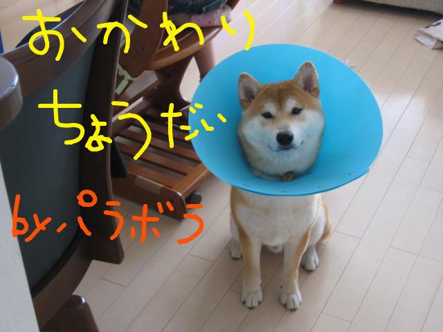f:id:maki-mama:20090403145428j:image:w300