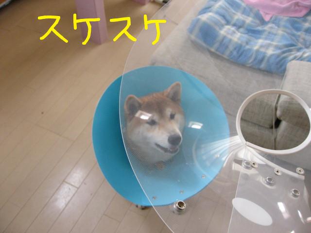 f:id:maki-mama:20090405121952j:image:w300