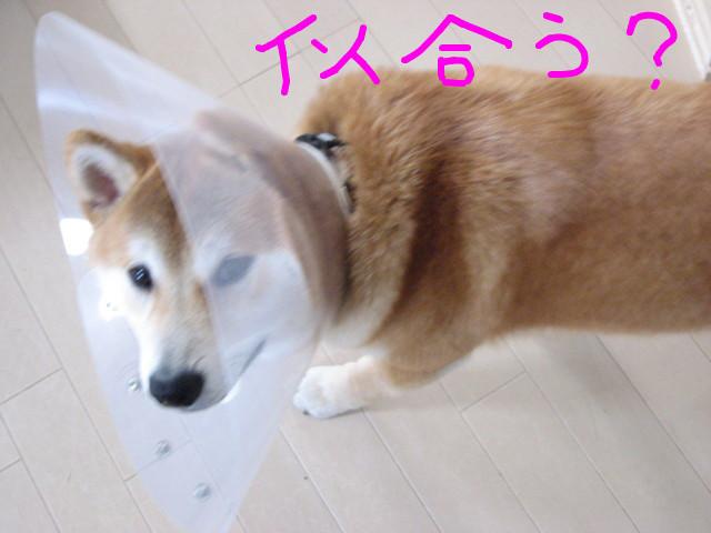 f:id:maki-mama:20090405121953j:image:w300