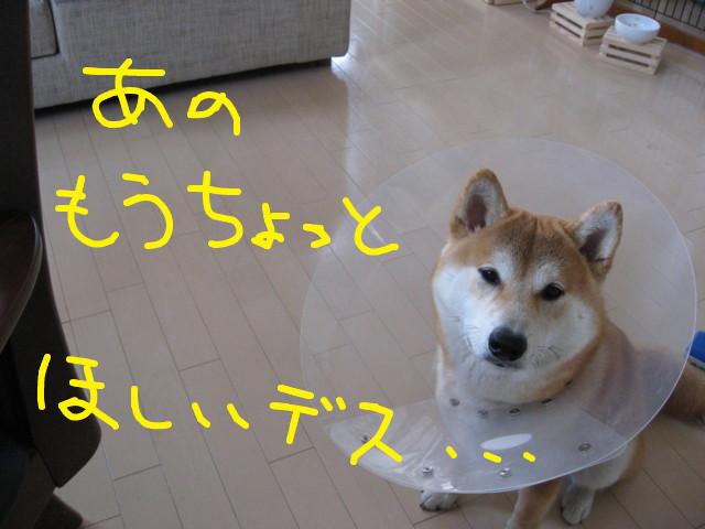 f:id:maki-mama:20090406130005j:image:w300