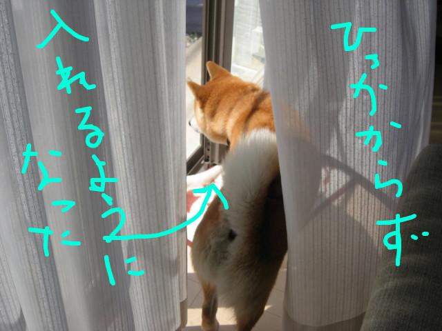 f:id:maki-mama:20090409114821j:image:w300