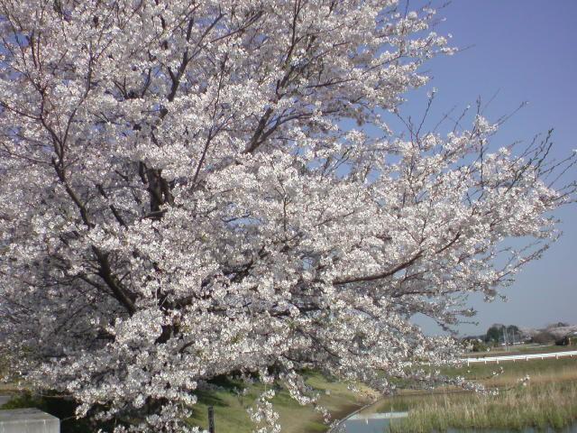f:id:maki-mama:20090410134419j:image:w300