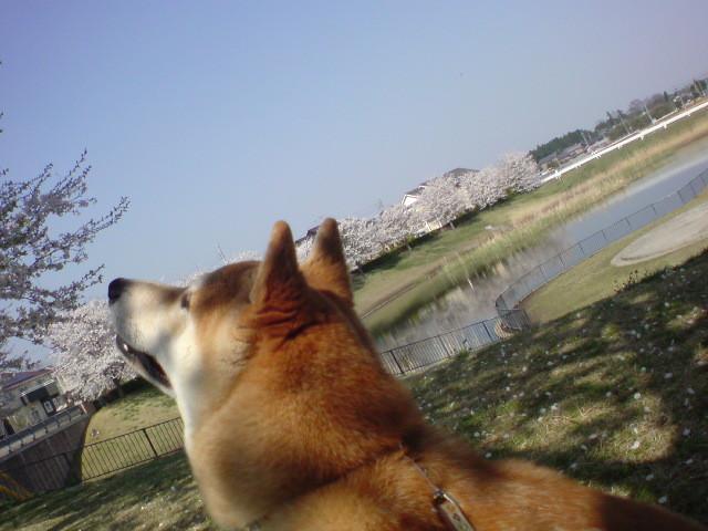 f:id:maki-mama:20090410134420j:image:w300