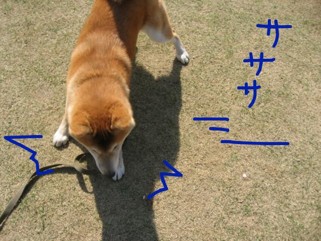 f:id:maki-mama:20090410160503j:image:w300