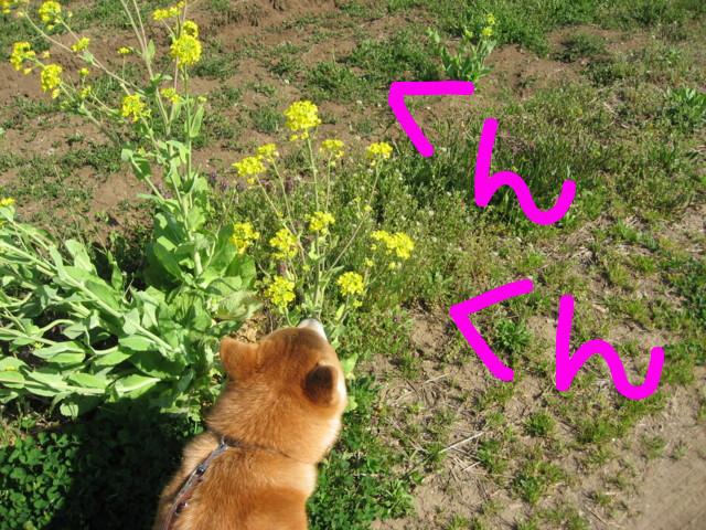 f:id:maki-mama:20090410160506j:image:w300