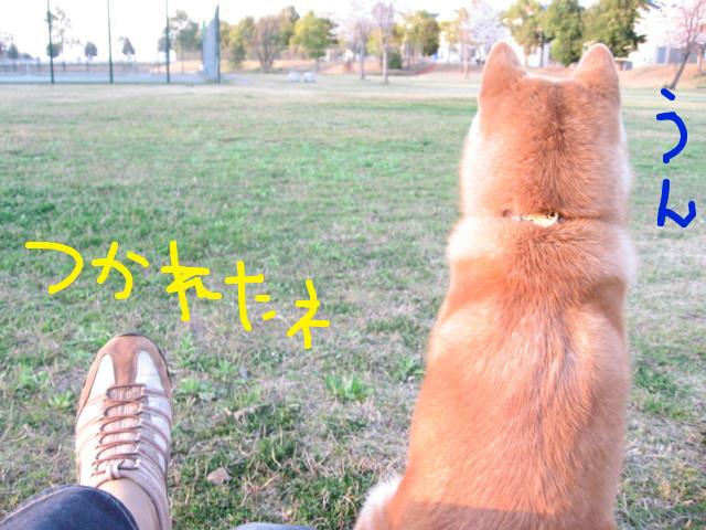 f:id:maki-mama:20090410213724j:image:w300
