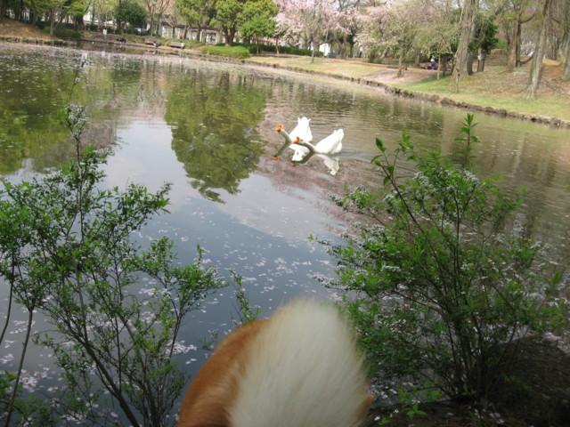 f:id:maki-mama:20090413074724j:image:w300