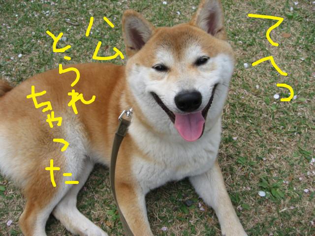 f:id:maki-mama:20090413074727j:image:w300