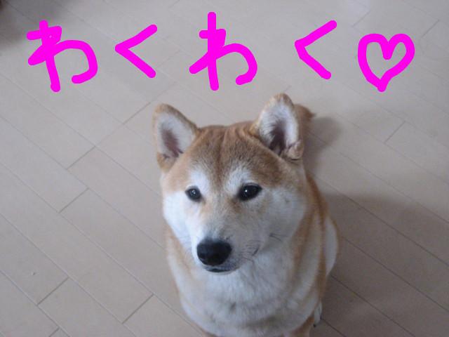 f:id:maki-mama:20090414145952j:image:w300