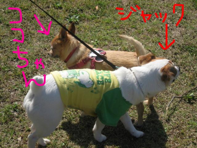 f:id:maki-mama:20090415162455j:image:w300