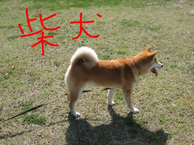 f:id:maki-mama:20090415162456j:image:w300