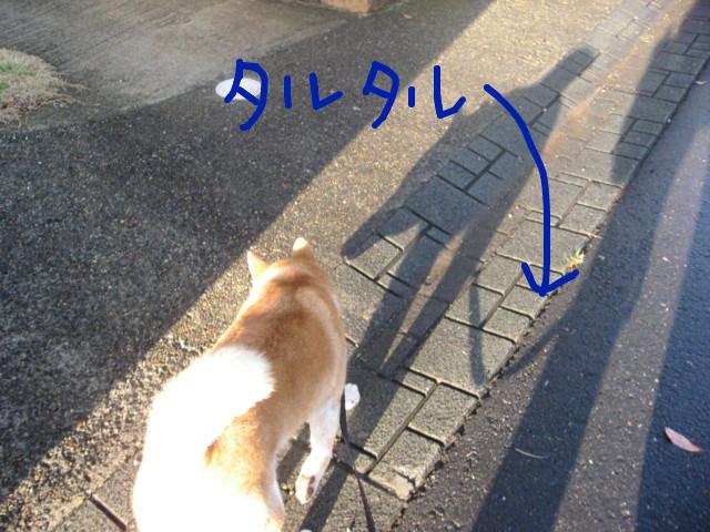 f:id:maki-mama:20090415162501j:image:w300