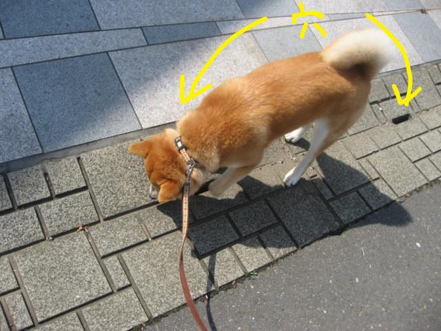 f:id:maki-mama:20090416130646j:image:w300