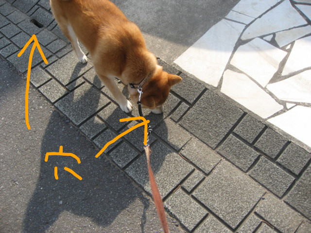f:id:maki-mama:20090416210556j:image:w300