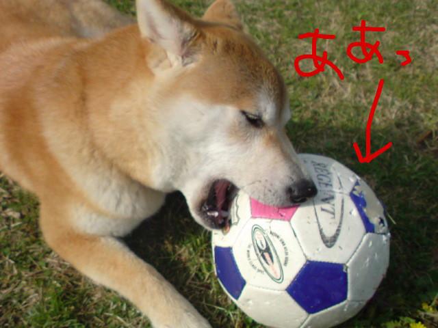 f:id:maki-mama:20090419104355j:image:w300