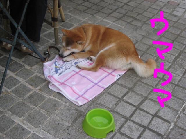 f:id:maki-mama:20090419142547j:image:w300
