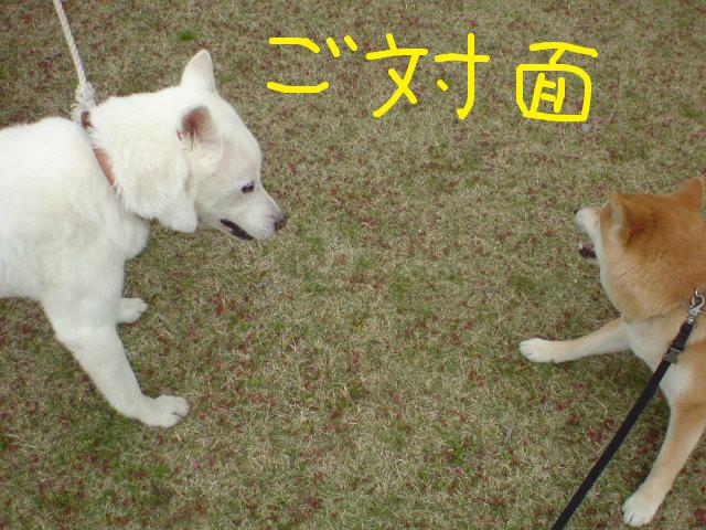f:id:maki-mama:20090420105442j:image:w300