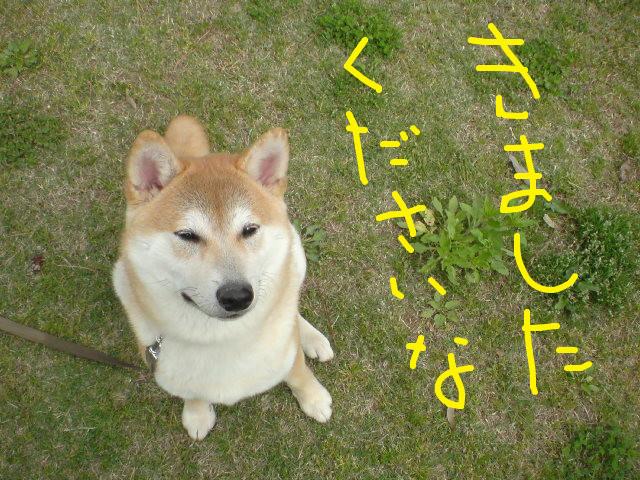 f:id:maki-mama:20090424095153j:image:w300