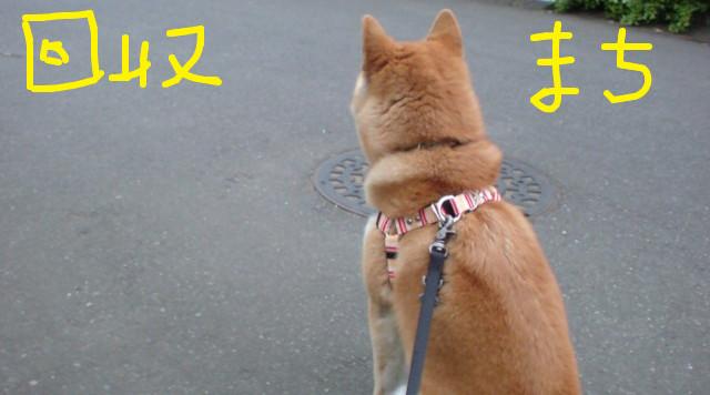 f:id:maki-mama:20090424195241j:image:w300