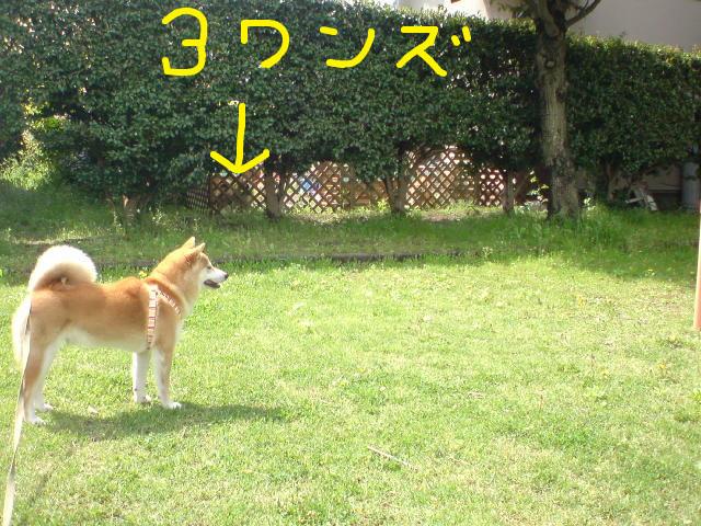 f:id:maki-mama:20090426162316j:image:w300