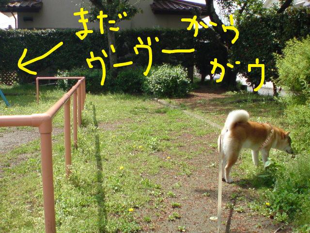 f:id:maki-mama:20090426162318j:image:w300