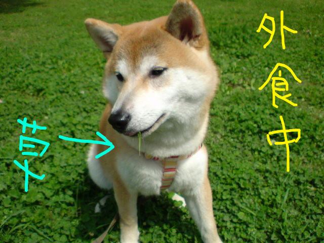 f:id:maki-mama:20090426162322j:image:w300