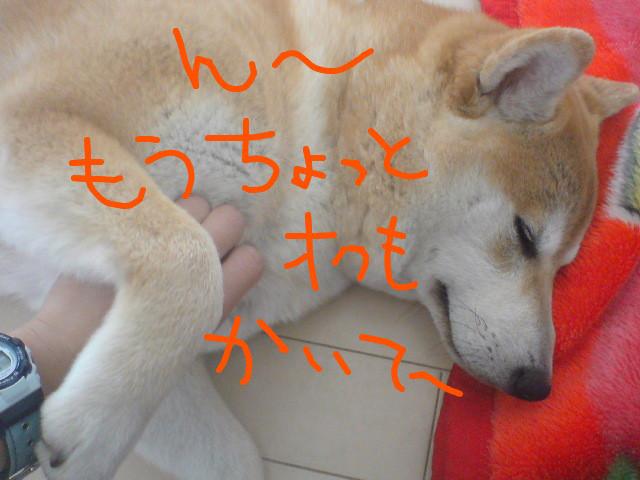 f:id:maki-mama:20090427073436j:image:w300