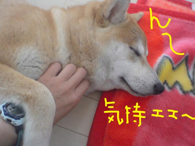f:id:maki-mama:20090427073437j:image:w300