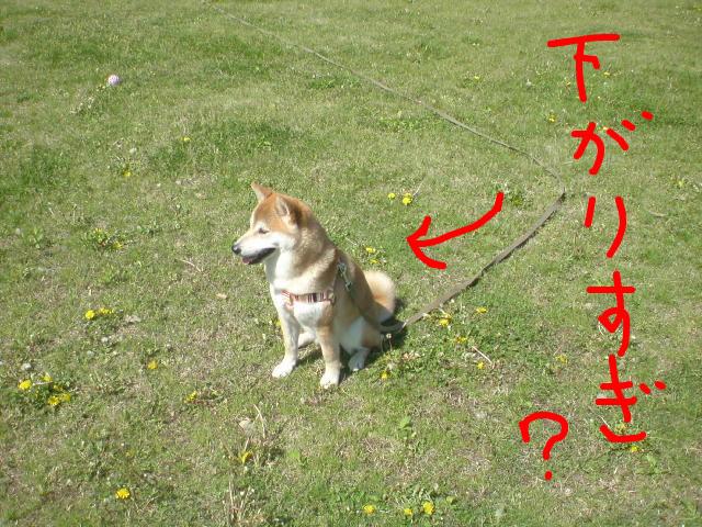 f:id:maki-mama:20090427121015j:image:w300