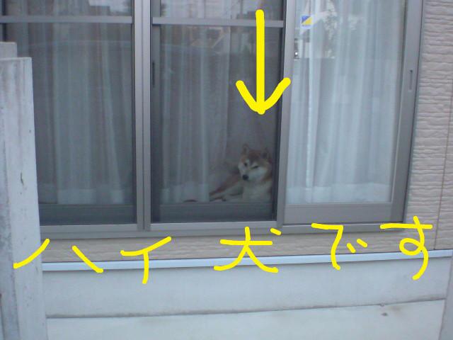 f:id:maki-mama:20090429124438j:image:w300
