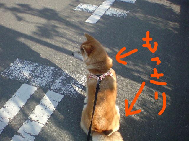 f:id:maki-mama:20090429124439j:image:w300