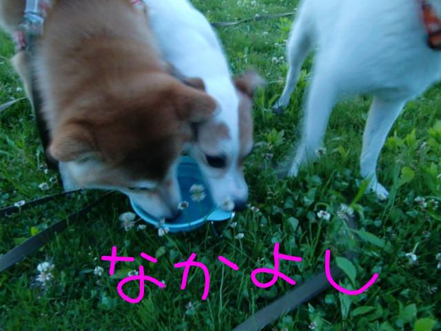 f:id:maki-mama:20090502221646j:image:w300