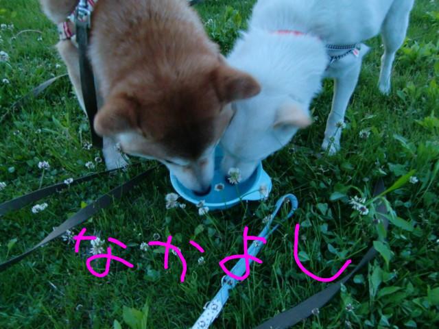 f:id:maki-mama:20090502221647j:image:w300