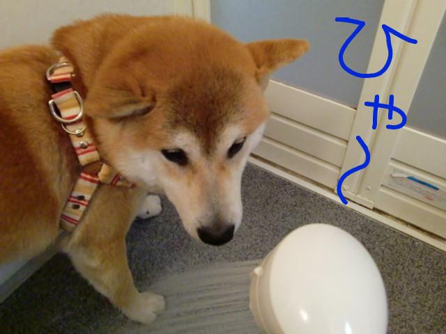f:id:maki-mama:20090503222022j:image:w300