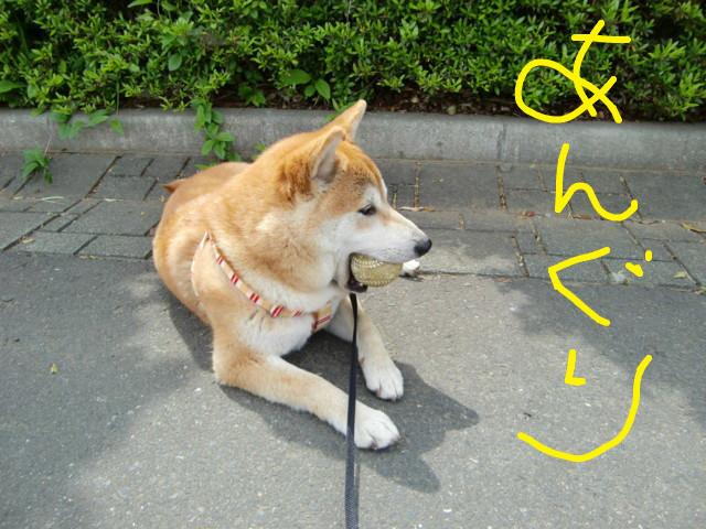 f:id:maki-mama:20090504113746j:image:w300