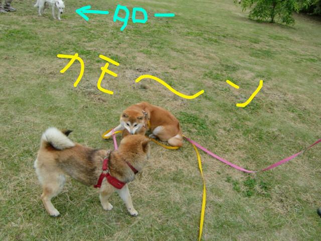 f:id:maki-mama:20090505132515j:image:w300