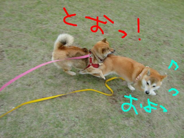 f:id:maki-mama:20090505132518j:image:w300