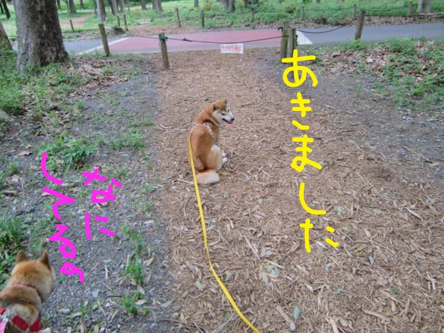 f:id:maki-mama:20090505132521j:image:w300