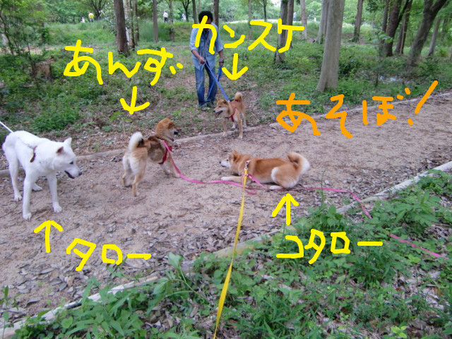 f:id:maki-mama:20090505132530j:image:w300