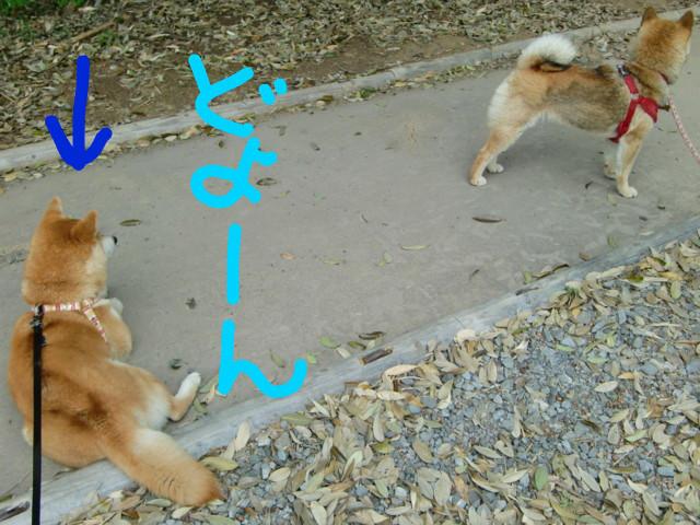 f:id:maki-mama:20090505132535j:image:w300