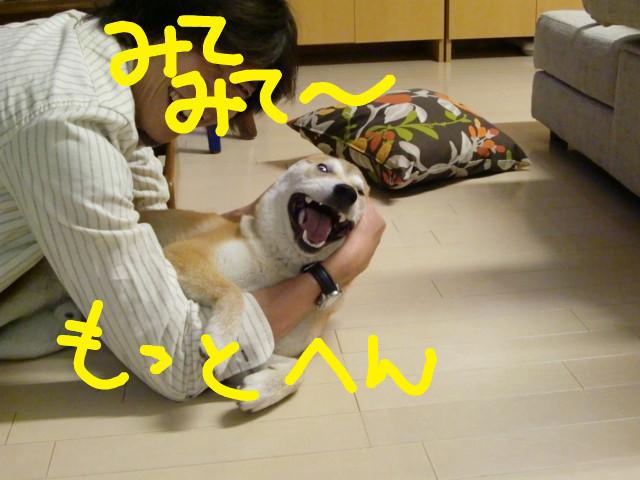 f:id:maki-mama:20090507095453j:image:w300