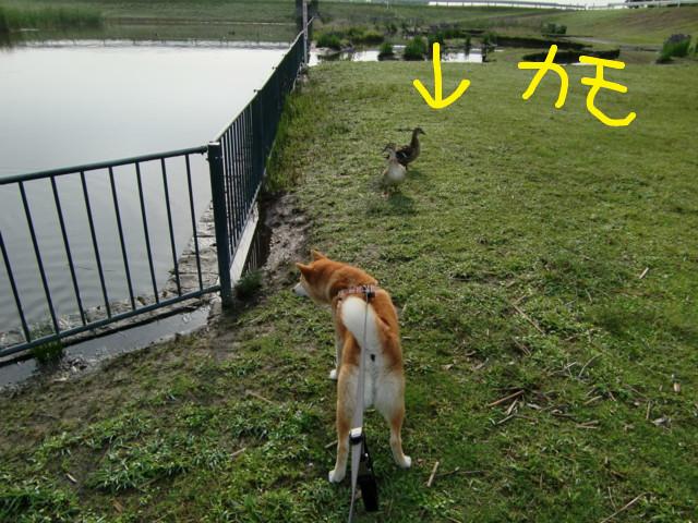 f:id:maki-mama:20090509131552j:image:w300