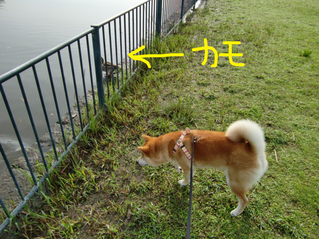 f:id:maki-mama:20090509131553j:image:w300