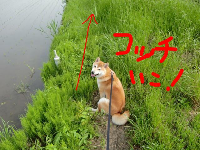 f:id:maki-mama:20090513114234j:image:w300