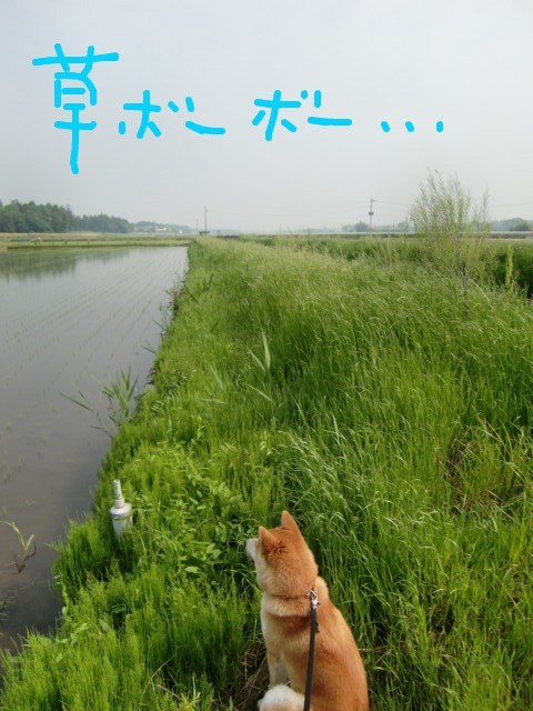f:id:maki-mama:20090513114235j:image:w300