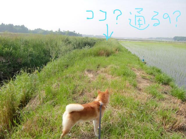 f:id:maki-mama:20090513114236j:image:w300