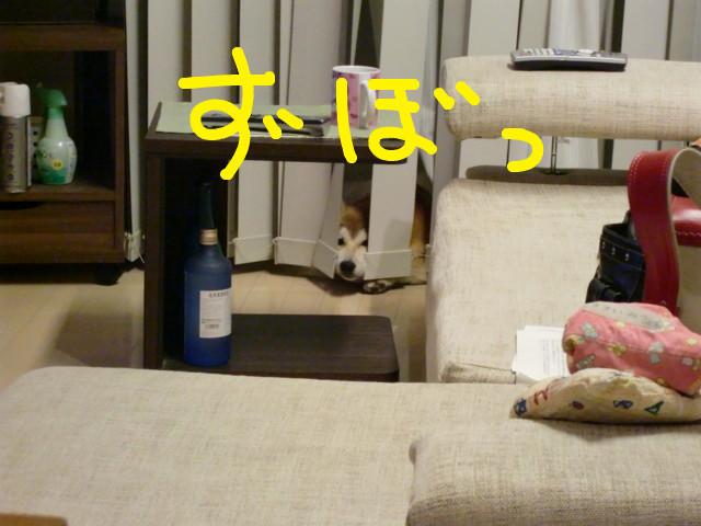 f:id:maki-mama:20090516081713j:image:w300