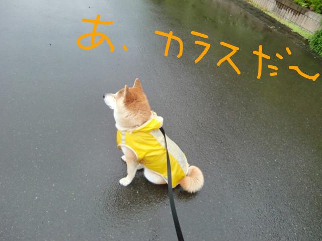 f:id:maki-mama:20090517075915j:image:w300