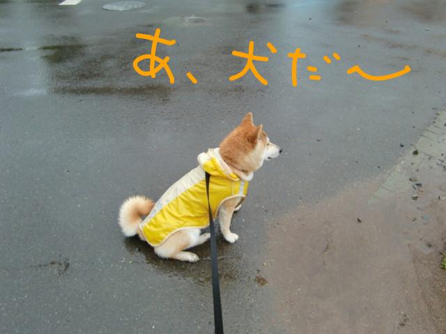 f:id:maki-mama:20090517075916j:image:w300