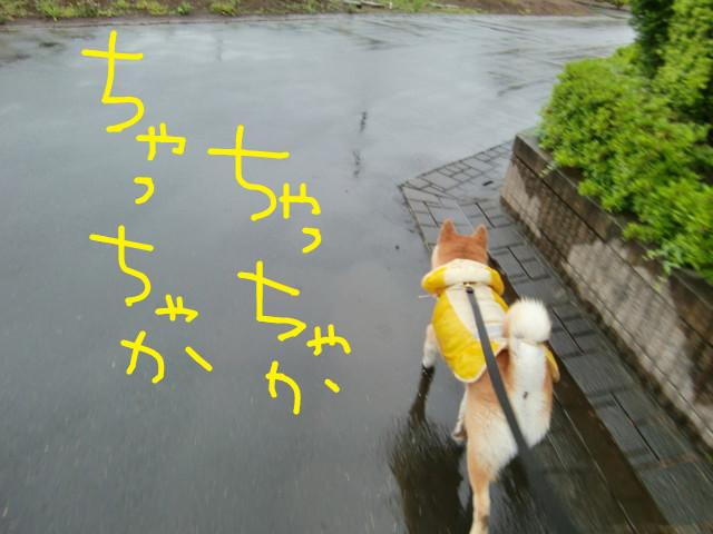 f:id:maki-mama:20090517075924j:image:w300